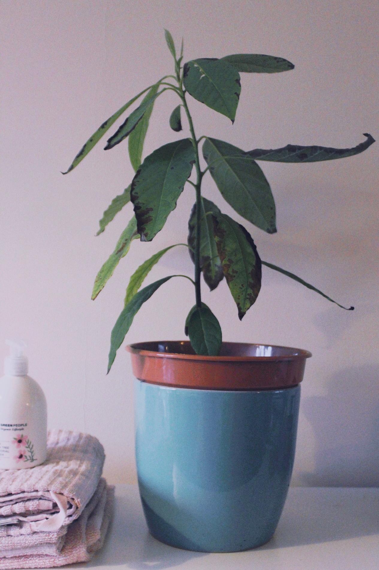 Green People - organic winter hand care with the lemon tea tree & manuka range